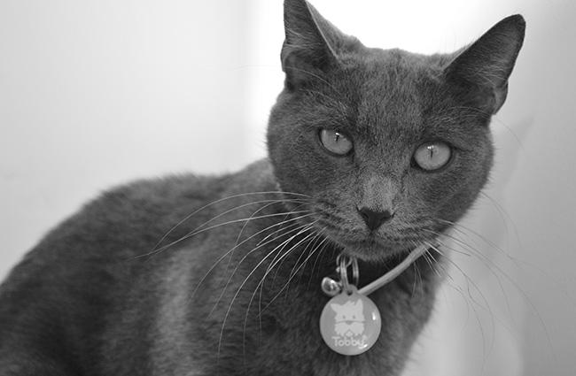 recuperacion-de-gatos-perdidos-tobbbid